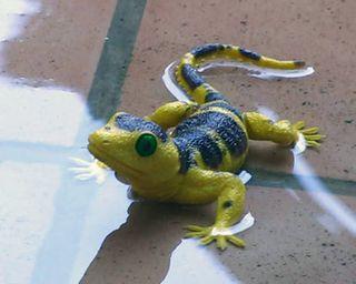 Lizard-rain
